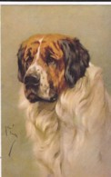 AS90 Animals - Dog - St. Bernard - Artist Signed Arthur Wardle - Chiens