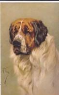 AS90 Animals - Dog - St. Bernard - Artist Signed Arthur Wardle - Cani