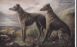 AS90 Animals - Dog - Deerhounds - Hunde