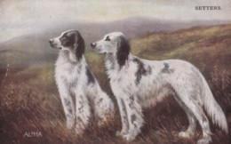 AS90 Animals - Dog - Setters - Dogs