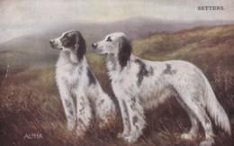 AS90 Animals - Dog - Setters - Hunde