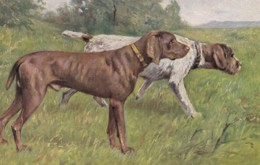 AS90 Animals - Dog - Pointers - Dogs
