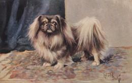 AS90 Animals - Dogs - Pekingese - Artist Signed Richard ? - Hunde