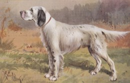 AS90 Animals - Dogs - English Setter - Artist Signed - Dogs
