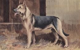 AS90 Animals - Dogs - Alsatian - Artist Signed - Perros