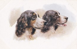 AS90 Animals - Dogs - Spaniels - Artist Signed CT Howard - Dogs