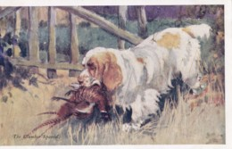 AS90 Animals - Dogs - The Clumber Spaniel By G Vernon Stokes - Dogs