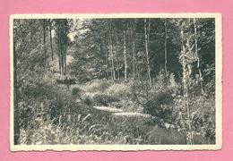 C.P. Rance =   Vallée De L' Eau D'EPPE :  Un  Sous-bois - Sivry-Rance
