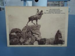 Caribou Parc Terre-Neuvien Beaumont-Hamel ( Somme) - Unclassified