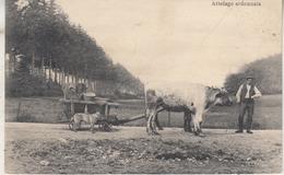 Attelage Ardennais - 1911 - Edit. Gaspard Eyen, La Gleize - Andere