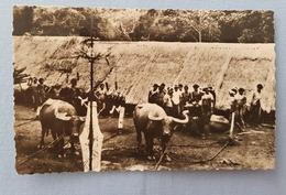 CPA DALAT VIETNAM Sacrifice Des Buffles 1948 - Vietnam