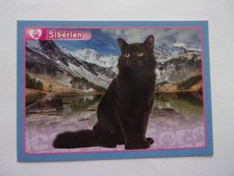 PANINI ANIMAL WORLD Animaux N°323 Chat Sibérien Cat Katze Gato - Edition Française