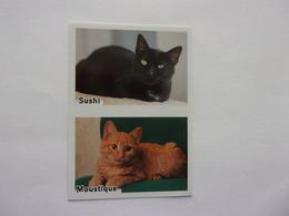 PANINI ANIMAL WORLD Animaux N°528 A & 528B Chat Cat Katze Gato Sushi Moustique - Edition Française