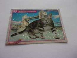PANINI ANIMAL WORLD Animaux N°317 Chat Cat Katze Gato British Shorthair - Edition Française