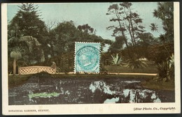 "AUSTRALIA BOTANICA GARDENS SYDNEY. Edition Star Photo Co. Copyright / Cancellation ""Miller's Point 22/Feb/1908"" - Sydney"