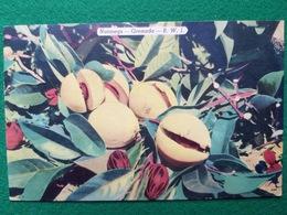 Grenada Postcard - Ansichtskarten