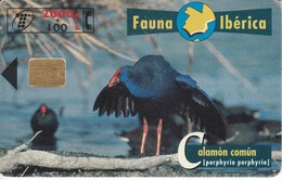 B-072 CALAMON COMUN FAUNA IBERICA DEL 5/98 Y TIRADA 100000 - Spagna