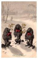 Dog , 3 Black Poodles , Snow, Heureuse Annie - Dogs