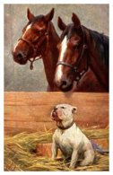 Dog And Horses In Barn , Artist Signed - Dogs