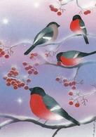 Bird - Birds - Oiseau - Vogel - Uccello - Pássaro - Bullfinches In Winter Landscape - Red Cross 1996 - Double Card - Christmas