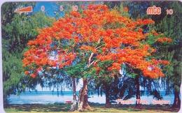 Flame Tree 10 Units - Noordelijke Marianen
