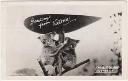 GREETINGS FROM VICTORIA, AUSTRALIA. KOALA, NATIVE BEAR. POSTED 1955 - Australia
