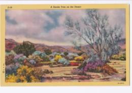 AK46 A Smoke Tree On The Desert - Linen - United States
