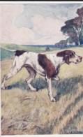 AS91 Animals - Dog - The Pointer, Artist Signed G. Vernon Stokes - Hunde