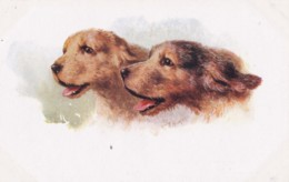 AS91 Animals - Dog - Otter Hounds, Artist Signed C.T. Howard - Dogs