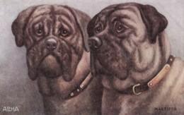 AS91 Animals - Dog - Mastiffs - Dogs