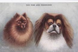 AS91 Animals - Dog - Toy Pom And Pekingese - Hunde