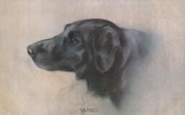 "AS91 Animals - Dog - ""Sambo - Dogs"