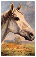 """Horse , Arab,  Tuck""""s 9254 - Horses"""