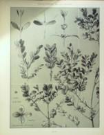 BUIS-GRAVURE FLORALE-141-1870-38x30cm - Estampes & Gravures