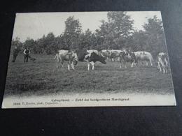 Belgique  België  ( 408 )   Calmpthout   Kalmthout   Zicht Der Landgoederen Marckgraaf - Kalmthout