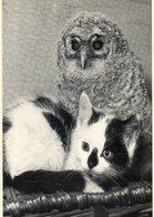 - Le Petit Chat Et La Chouette. - Photo Sipa Press-Rex - - Katzen