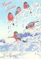 Bird - Birds - Oiseau - Vogel - Uccello - Pássaro - Bullfinches In Winter Landscape - Christmas
