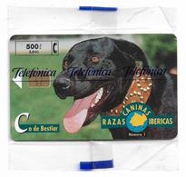 Spain - Telefónica - Razas Caninas Ibericas - Ca De Bestiar Dog - P-393 - 08.1999, 500PTA, 5.300ex, NSB - España