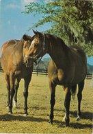 Pferdepaar - Gelaufen 1983 Nach GB - Pferde