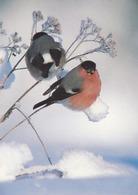 Bird - Birds - Oiseau - Vogel - Uccello - Pássaro - Bullfinches In Winter Landscape - WWF Panda Logo - Double Card - Christmas