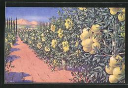 Künstler-AK Jaffa, A Grapefruit Grove - Palästina