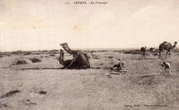 Sahara,Cpa Au Pâturage - Sahara Occidental