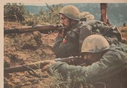 Cartolina In Franchigia Militare  - Postcard / Non   Viaggiata - Unsent /   Forze Armate, F 45/01 - Franchise