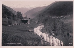 Procession En Valais, Cortège, Tous Habillés De Blanc (4278) - VS Wallis