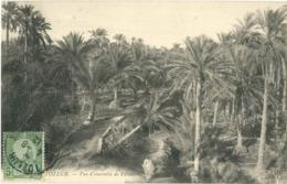 Cpa TOZEUR - 1912 - Vue D'ensemble De Palmiers - Túnez