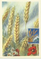 Cartes Maximum - San Marino - Wheat - Blé - Grano - Trigo - Saint-Marin