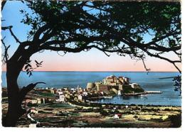 Calvi Le Port Et La Haute Ville - Calvi