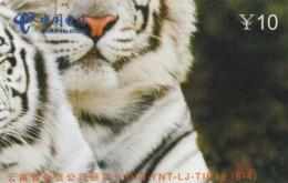 CHINA. FAUNA. PUZZLE. TIGRE - TIGER. YNT-LJ-TIP19(6-4). (013). - Puzzles