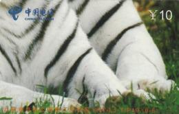 CHINA. FAUNA. PUZZLE. TIGRE - TIGER. YNT-LJ-TIP19(6-6). (015). - Puzzles
