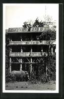 CPA Nyeri, Elefant Vor Einem Haus - Kenia